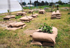 Healthy Soil Strong Trees - Erosion Control USA